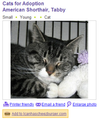 adoptcat.jpg
